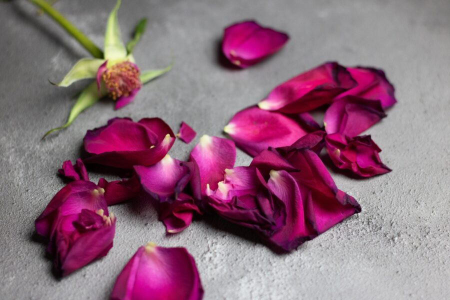 Picture of a red rose from which all the petals have falen